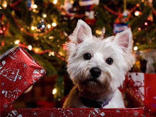 Foto Di Natale Con Cani.Areamediapress Informazioni