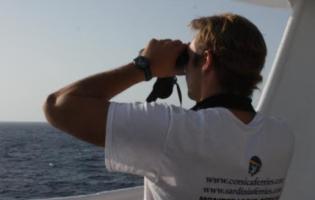Corsica Ferries rispetta il Santuario Pelagos, partita la stagione degli avvistamenti
