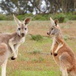 Go Australia primo in Europa a diventare membro di Ecotourism Australia